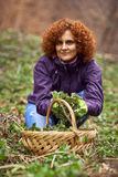 Woman picking nettles in a basket Royalty Free Stock Image