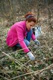 Woman picking nettles Royalty Free Stock Image