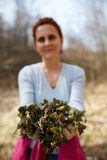 Woman picking nettles Stock Photos