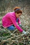 Woman picking nettles Stock Image
