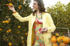 Woman Picking Oranges Stock Photos