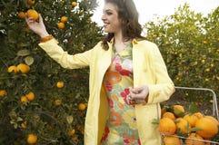 Woman Picking Oranges Stock Photos