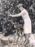 Woman picking oranges from a tree Stock Photos