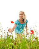 Woman picking poppies Royalty Free Stock Photos