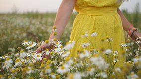 Woman picking up flowers on a meadow, hand close-up. Morning light, green grass. Vintage stock footage