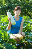 Woman is picking vegetable marrow Stock Photography