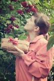 Woman picking Viburnum Royalty Free Stock Image