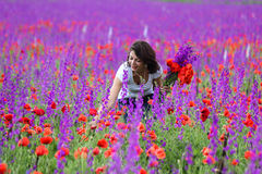 Woman Picking Wild Flowers Royalty Free Stock Image