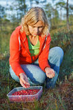 Woman picking wild organic cranberries Stock Photography
