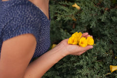 Woman picking yellow flowers Stock Photography