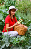 Woman picking zucchini Stock Photography