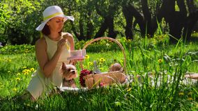Woman on a picnic eating cookies out of the box. A woman on a picnic in the woods eating cookies out of the box . next to her on the blanket a small dog stock footage
