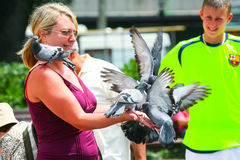 Woman with pigeons Royalty Free Stock Image
