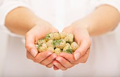 Woman with a Pile of Delicious Pineberries Royalty Free Stock Photography
