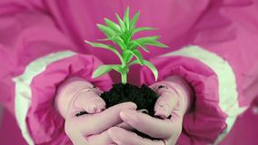 Woman in pink protective suit holding in hands soil and a green young plant stock video