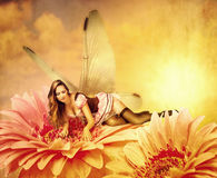 Woman pixie lies on a summer flower Stock Photography