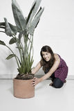 Woman Placing Large Potted Plant On Floor Stock Images