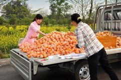 Pengzhou, China: Woman Buying Oranges Royalty Free Stock Images
