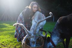 Woman in a plaid skirt feeding reindeer tarandus on green field. In summer.n Take care about animals at farm Royalty Free Stock Image