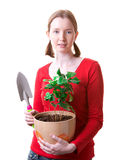 Woman with a plant. Young woman holding plant and trowel, isolated on white Stock Photos