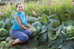Woman  in plant of cabbage. Mature woman working  in plant of cabbage Royalty Free Stock Photo