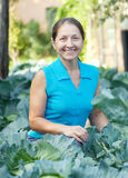 Woman  in plant of cabbage. Mature woman  in plant of cabbage Stock Photo