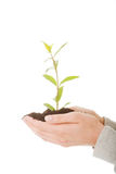 Woman with plant and dirt in hand Royalty Free Stock Photos