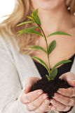Woman with plant and dirt in hand Stock Photos