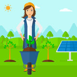 Woman with plant and wheelbarrow. A woman standing with a plant and soil in a wheelbarrow on a background with newly planted trees and solar panels vector flat Stock Photo