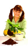 Woman planting. Smiling beautiful woman planting a flower isolated on a white background stock photo