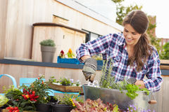 Woman Planting Container On Rooftop Garden Stock Photography
