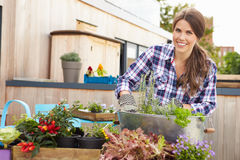 Woman Planting Container On Rooftop Garden stock image