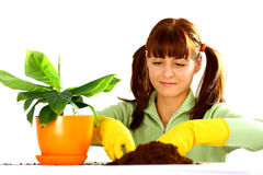 Woman planting a flower Royalty Free Stock Photo