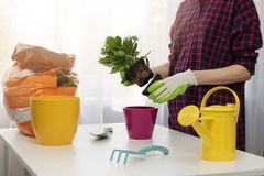 Woman planting flower in pot at home Royalty Free Stock Images