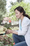 Woman planting flowers. Stock Photography