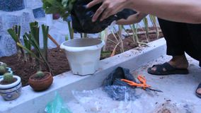 Woman planting flowers stock footage