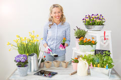Woman planting flowers in little pots Stock Photography