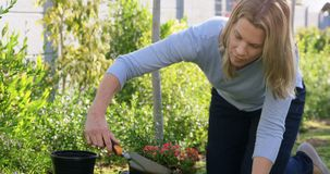 Woman planting in garden on a sunny day 4k stock footage