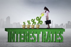 Woman is planting interest rates percentage Stock Images