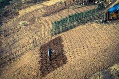 Woman planting, Laos. Woman planting seeds on the slopes of Mekong River, Laos stock image