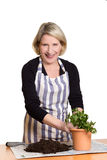 Woman planting parsley in pot Royalty Free Stock Photos
