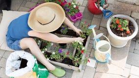 Woman planting petunia seedlings Stock Photo