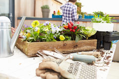 Woman Planting Rooftop Garden Royalty Free Stock Photography