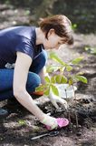 Woman planting seedling, focus on woman stock images