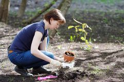 Woman planting young seedling Stock Photos