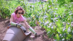 Woman plants a plant in the ground. Woman shoves a plant into the ground, leveling the ground stock video