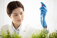 Woman plants scientist watching a test tube Royalty Free Stock Photo