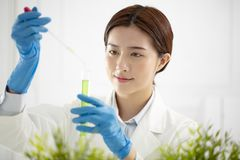 woman plants scientist watching a test tube Royalty Free Stock Photos