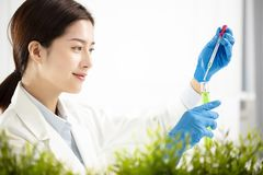 Woman plants scientist watching test tube Royalty Free Stock Photography