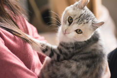 Woman play with her kitten Stock Image